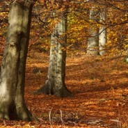 Dolina Huczka, torfowisko i kolory jesieni